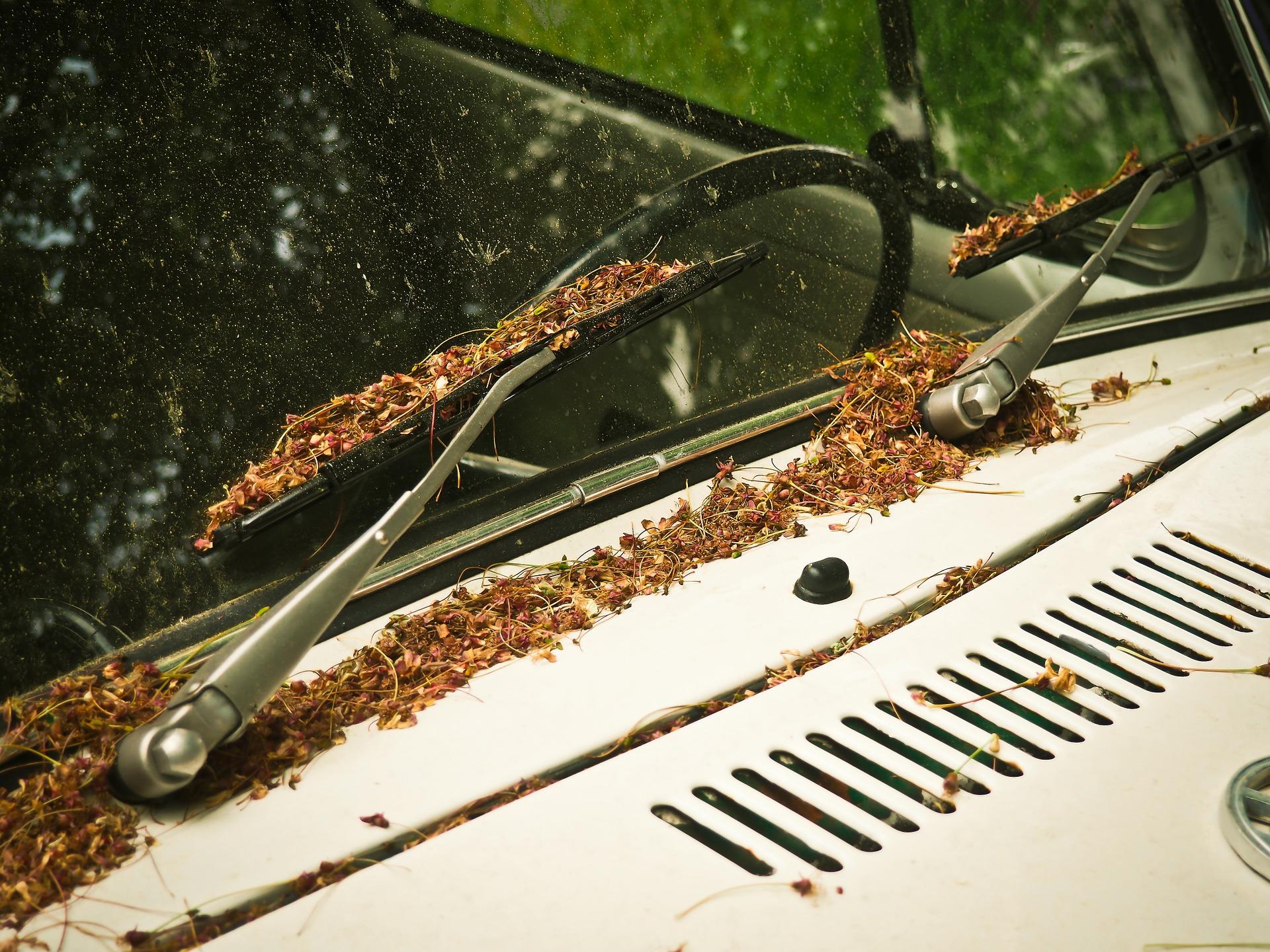 Comment bien nettoyer ses vitres de voiture? 1