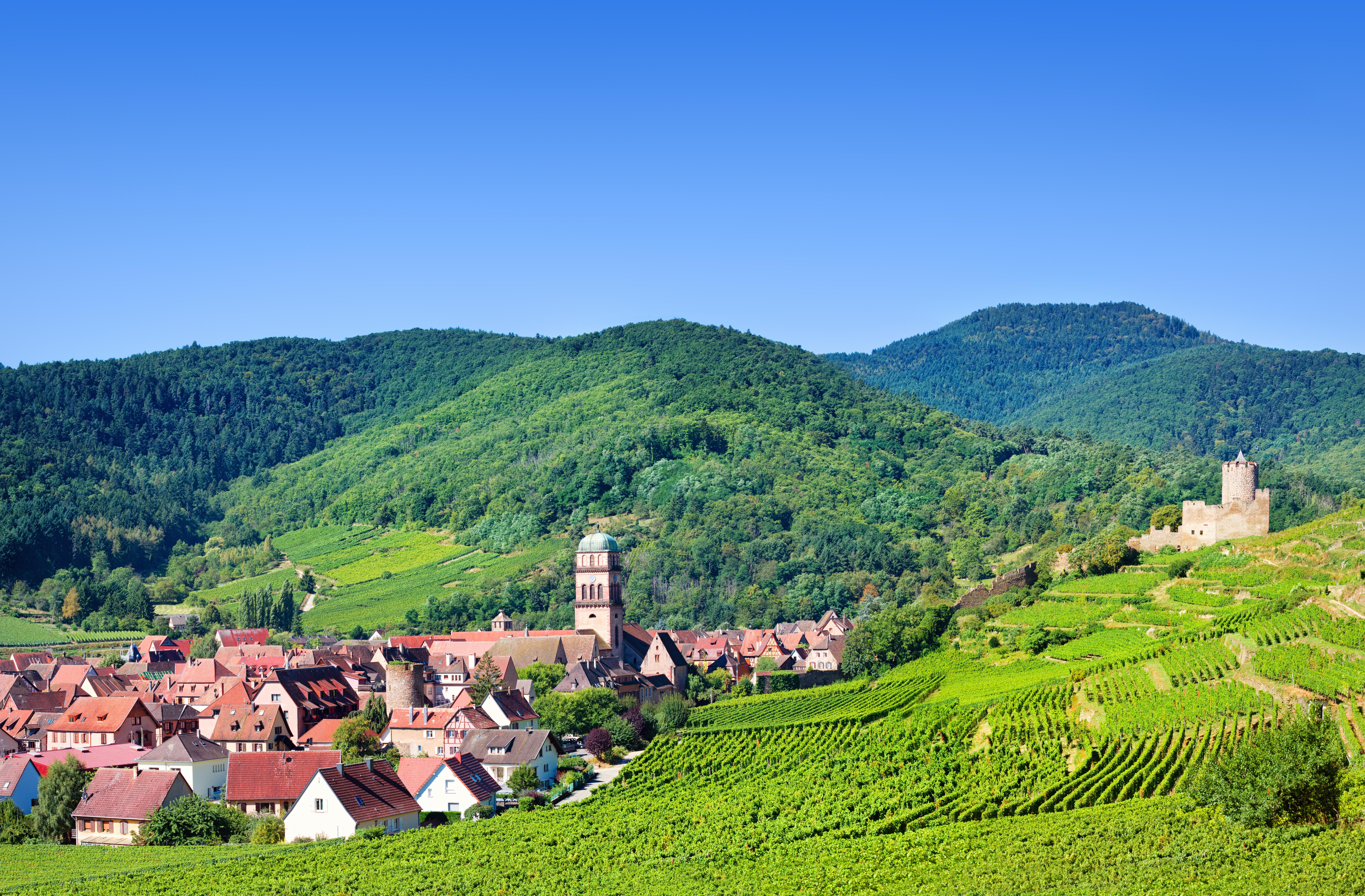La route des vins d'Alsace 1