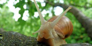 Quelles sont les bienfaits de la bave d'escargot?