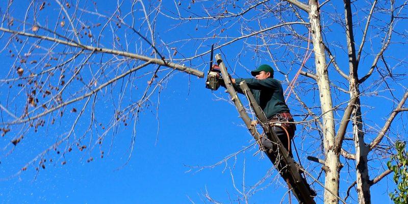 Pour l'élagage de vos arbres, rien ne vaut la technique d'un professionnel