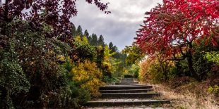 Disposez d'un harmonieux jardin avec votre paysagiste