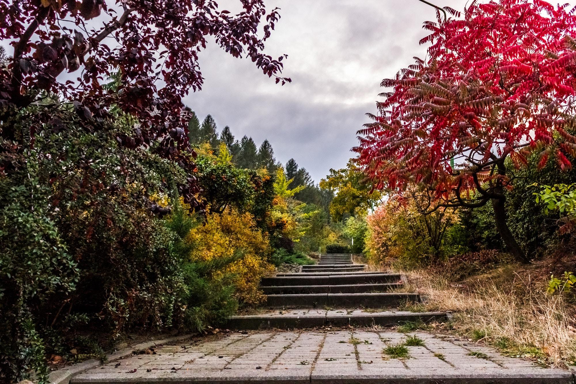 Disposez d'un harmonieux jardin avec votre paysagiste 2