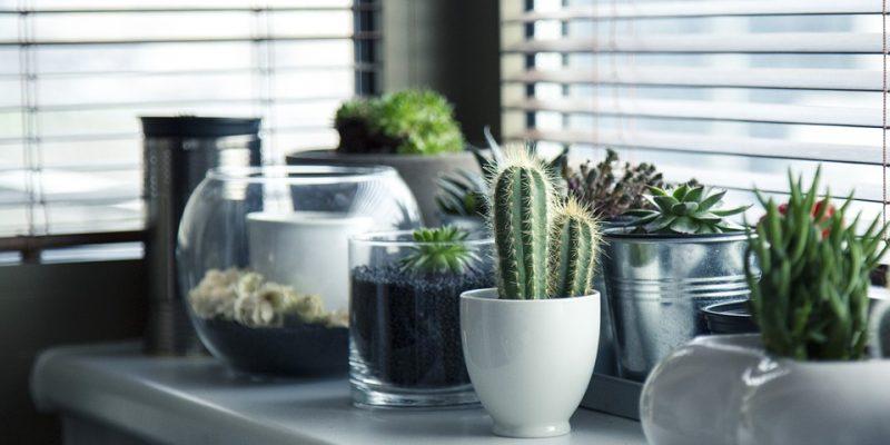 Rendez-vous dans une jardinerie pour trouver vos plantes d'intérieur