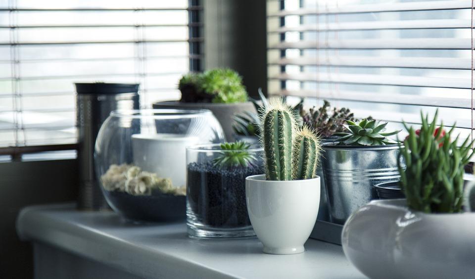 Rendez-vous dans une jardinerie pour trouver vos plantes d'intérieur 1