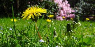 Le jardin de vos rêves avec votre paysagiste en Lorraine