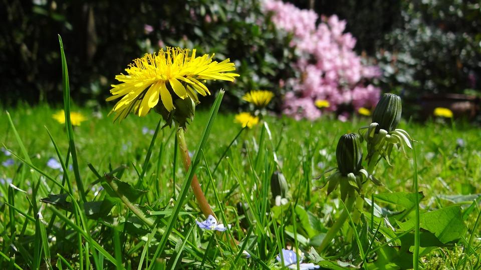 Le jardin de vos rêves avec votre paysagiste en Lorraine 1