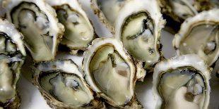 Comment bien choisir ses huîtres?