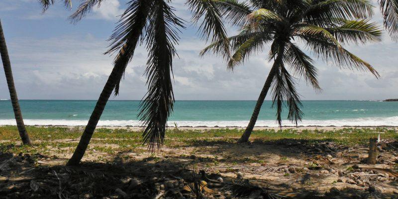 Les choses incontournables à faire et à voir en Martinique!