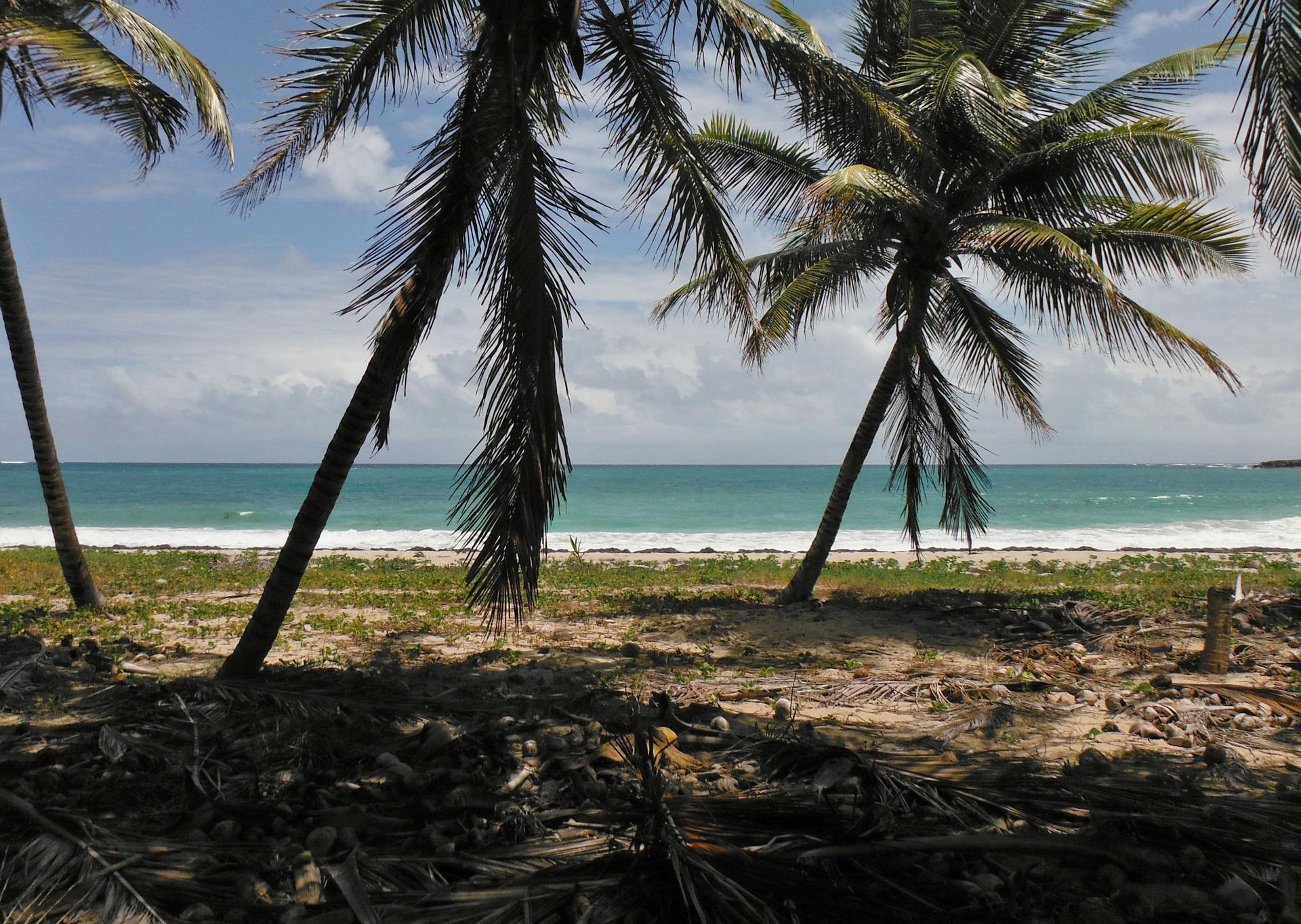 Les choses incontournables à faire et à voir en Martinique! 1