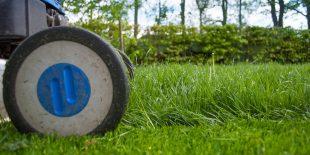 Pourquoi confier son jardin à un paysagiste professionnel ?